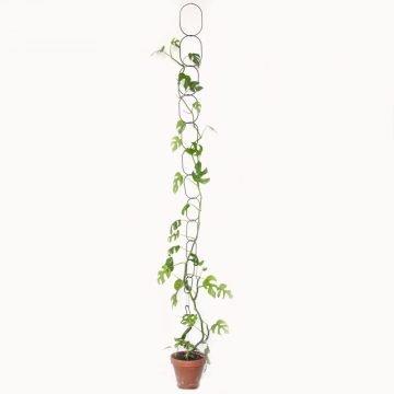 klimplanten plantensteun klimondersteuning pynappel messing zwart coating ketting